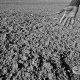 Developing world drought threat to EU rice and cotton intensifies research efforts